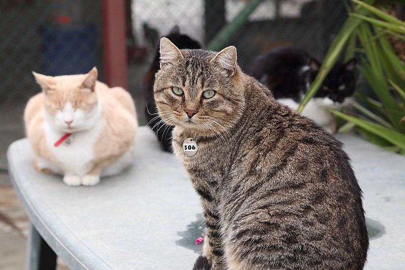 File:Malcolm Cat Sanctuary, Asomatos, Cyprus - panoramio (3).jpg