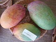 Mango Springfels Asit fs8.jpg