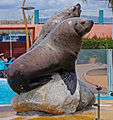 Marineland - sea lions.jpg