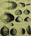 Martini Lister Historiæ animalium Angliæ, tres tractatus. Unus de araneis. Alter de cochleis tum terrestribus, tum fluviatilibus. Tertius de cochleis marinis. Quibus adjectus est quartus de lapidibus (20784037396).jpg