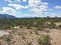 Matorral desertico - panoramio.jpg