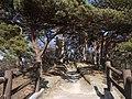 MatsushimaYondaikanOotakamori3.JPG