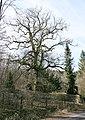 Maxsain Westerwald Oak Tree.jpg