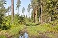 Meža ceļš, Valgundes pagasts, Jelgavas novads, Latvia - panoramio.jpg