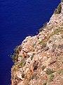 Mediterranean Sea(Alanya)мыс Джильварда - panoramio (4).jpg