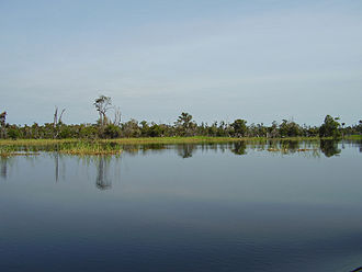 Mahakam River - Lake Melintang at Teluk Tuk with re-growing burnt swamp forest on the background