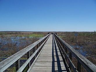 Paynes Prairie Preserve State Park - Image: Micanopy Paynes Prairie overlook bdwlk 01