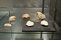 Middle Paleolithic tools, Museum of Western Bohemia in Pilsen, 187664.jpg