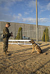 Military working dogs benefit military police 150112-M-KE800-074.jpg