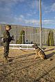 Military working dogs benefit military police 150112-M-KE800-074.jpg