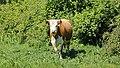 Milltown, Co. Kerry (506474) (27076417443).jpg