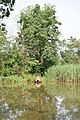 Mindszent, 6630 Hungary - panoramio (4).jpg