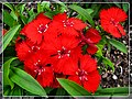 Mist Lane Flowers - Flickr - pinemikey.jpg