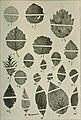 Mitteilungen der Deutschen Dendrologischen Gesellschaft (1918) (14773066201).jpg