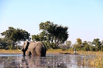 Mokoro - Travelling in a Mokoro (Okavangodelta 2017)