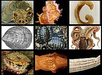 Moluscos Collage.jpg