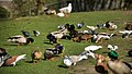 Monseigneur Nolenspark - panoramio (2).jpg