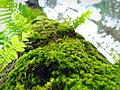 Moss on the tree.jpg
