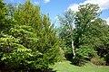 Mount Airy Arboretum - DSC03860.JPG