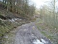 Muddy track in South Wood - geograph.org.uk - 1195754.jpg