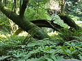 Muir Woods National Monument 03.jpg