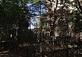 Muzeum Wolińskiego Parku Narodowego Haliaeetus albicilla 2016-09-02 p.jpg