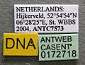 Myrmica lobicornis casent0172718 label 1.jpg