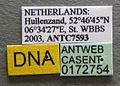 Myrmica lonae casent0172754 label 1.jpg