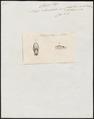 Naja rhombeata - kop - 1837 - Print - Iconographia Zoologica - Special Collections University of Amsterdam - UBA01 IZ11800127.tif