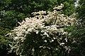 National Botanic Garden,Dublin,Ireland - panoramio (38).jpg
