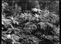 Native bush on the Korokoro track. ATLIB 274840.png