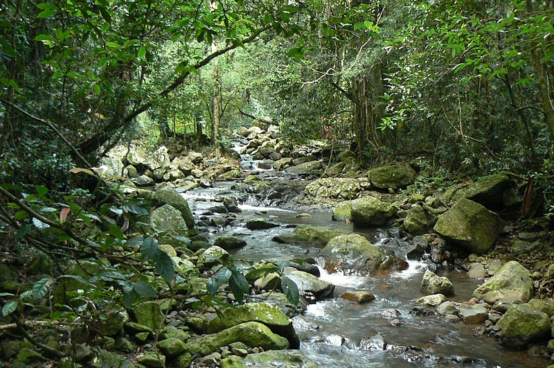 Springbrook and Tambourine Rainforest Tour in Brisbane – A Glimpse into Brisbane's Vast Outdoors
