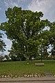 Naturdenkmal Linden am Sedanplatz, Kennung 82350290001, Gechingen-Bergwald 01.jpg