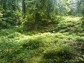 Nature along Varissuo jogging track - panoramio (1).jpg