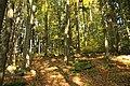 Nature reserve Ptaci stena in autumn 2011 (12).JPG