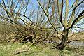 Naturschutzgebiet Haseder Busch - Am Altarm (4).jpg