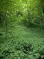 Naturschutzgebiet Hobelsberg Riesn 1.jpg