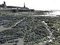 Near-vertical Rock Strata in Aberystwyth in Wales - geograph 4046963.jpg