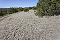 Near Ft. Stanton - Flickr - aspidoscelis (7).jpg