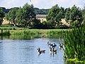 Near Yarwell on the River Nene, August 2013 - panoramio.jpg