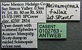 Neivamyrmex swainsonii casent0102763 label 1.jpg