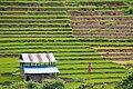 Nepal1015.jpg