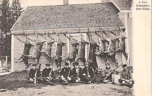 Deer hunting - A New Hampshire deer hunt circa 1910.