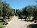 Nice - Jardins de Cimliez - Les oliviers-4.jpg
