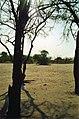 Nosy hyaena (239233173).jpg