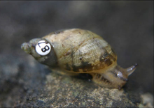 right side view of a snail with a number 87 on its shell