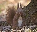 Nutty squirrel (51028651432).jpg