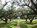 Oak Alley - View From House.JPG