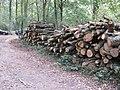 Oak log piles beside bridleway in Petsalls Copse - geograph.org.uk - 1544520.jpg