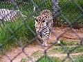 Oaklawn Farm Zoo, May 16 2009 (3539722130).jpg